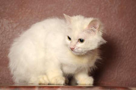 white sick cat Stock Photo - 18849056