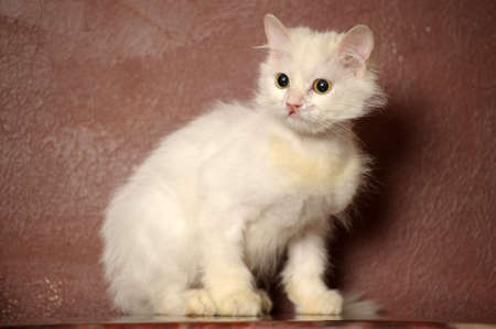 seeps: white sick cat