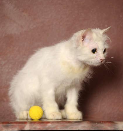 white sick cat Stock Photo - 18849037