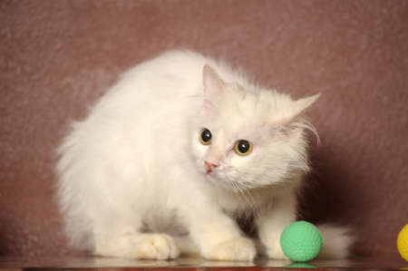 white sick cat Stock Photo - 18849035