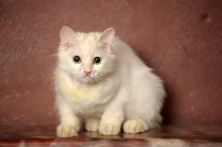 white sick cat photo