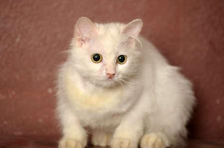 white sick cat Stock Photo - 18849036