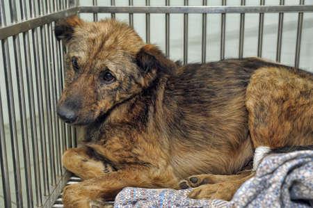 pobre perro en una jaula