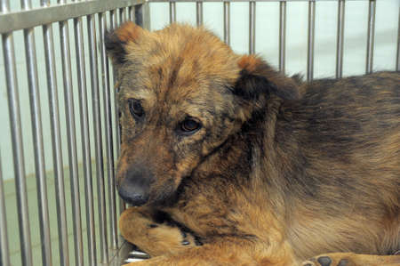 best shelter: poor dog in a cage
