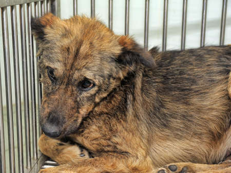 inhumane: poor dog in a cage