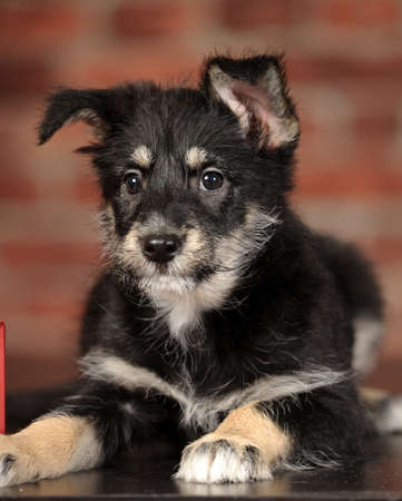 Half-breed terrier puppy photo