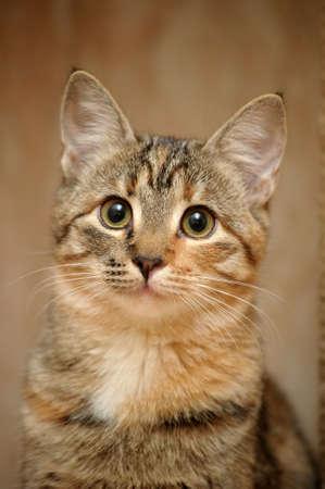 Domestic cat Standard-Bild