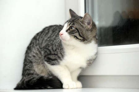 cat on the window sill photo