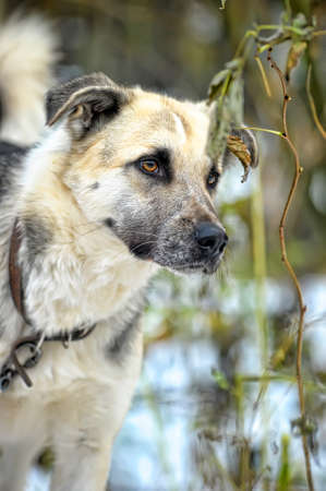 mongrel dog Stock Photo - 17547895