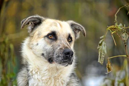 mongrel dog Stock Photo - 17547904