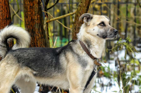 Half-breed dog Stock Photo - 17547887