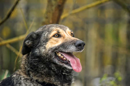 Half-breed dog Stock Photo - 17547900