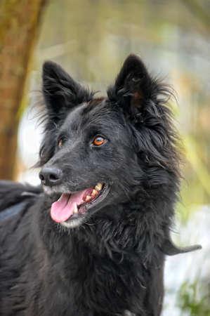 black half-breed dog  photo