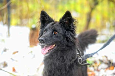 black half-breed dog  Stock Photo - 17510519