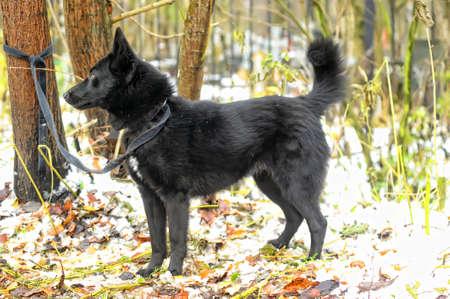 black half-breed dog in winter photo