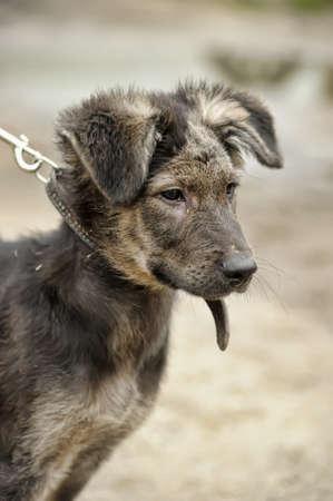 impoverished: unfortunate sick puppy
