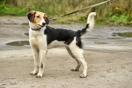 half breed: hound dog