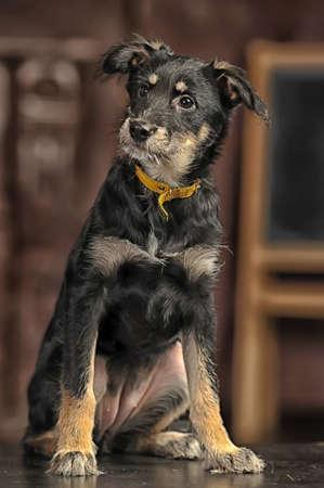 Half-breed terrier puppy photo
