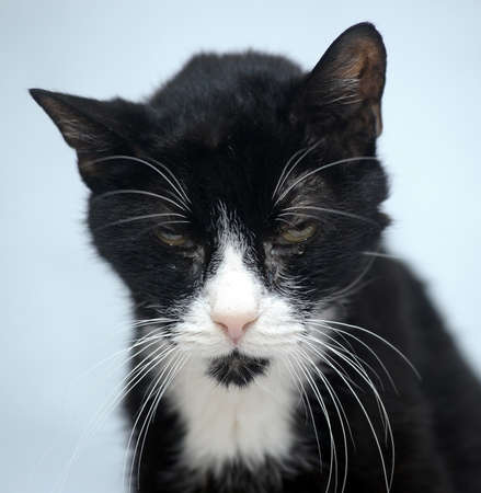 black and white skinny old cat Stock Photo - 17976103