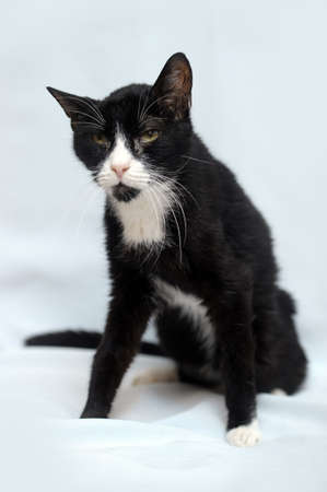 black and white skinny old cat Stock Photo - 17976099
