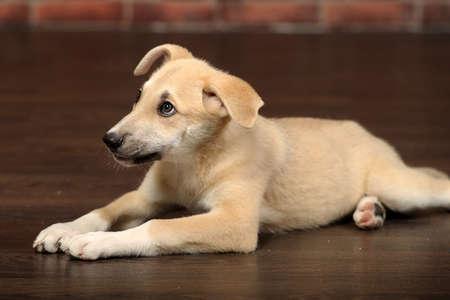 cute beige puppy Stock Photo - 17784086