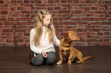 girl with red puppy Stock Photo - 17787491