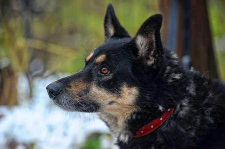 Half-breed dog Stock Photo - 17936145