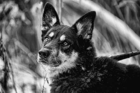 Half-breed dog Stock Photo - 17936170