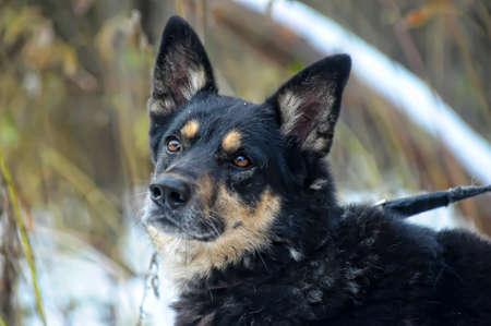 Half-breed dog Stock Photo - 17936136