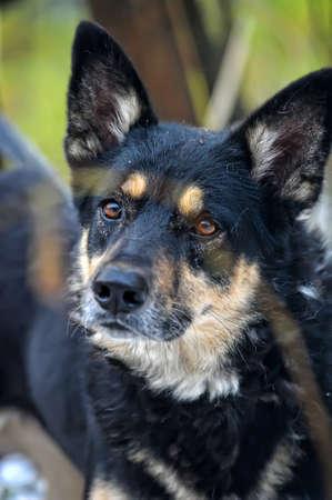 Half-breed dog Stock Photo - 17936168