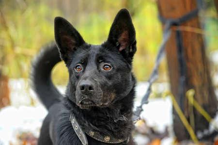 black mongrel dog photo