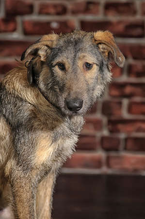 mongrel dog Stock Photo - 18593411
