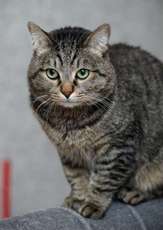 Cat with large eyes Stock Photo - 18340217