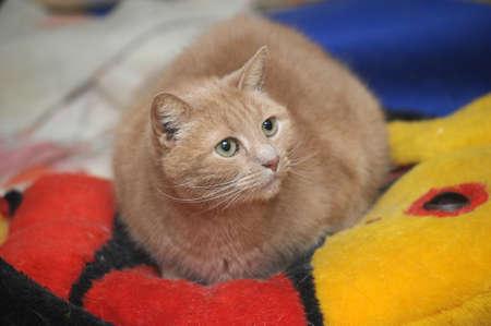 domestics: Cat