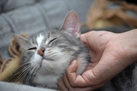 fondle:  hand stroking cat