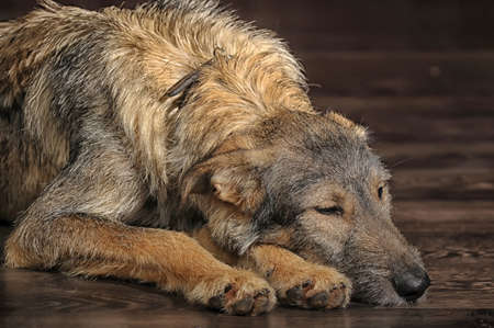 Brown Mixed-Breed Dog Stock Photo - 17865114