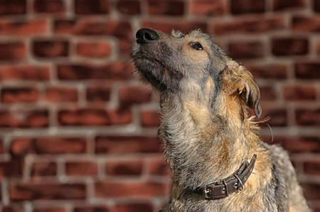 Brown Mixed-Breed Dog Stock Photo - 17865094