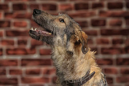 Brown Mixed-Breed Dog Stock Photo - 17865097