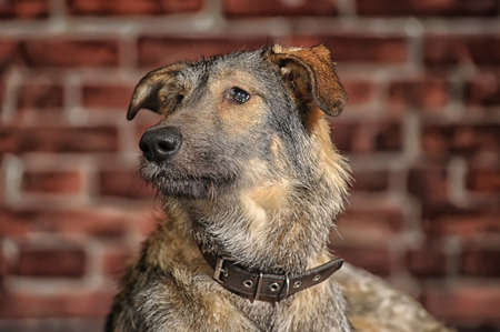 Brown Mixed-Breed Dog Stock Photo - 17865109