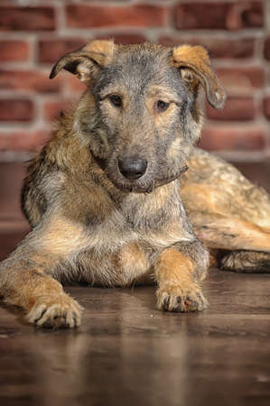 Brown Mixed-Breed Dog Stock Photo - 17865122