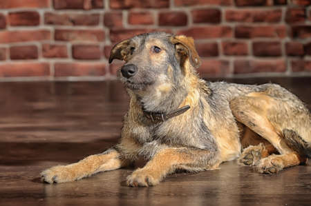 Brown Mixed-Breed Dog Stock Photo - 17865116