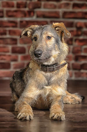 Brown Mixed-Breed Dog photo