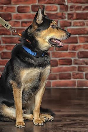 mongrel dog photo