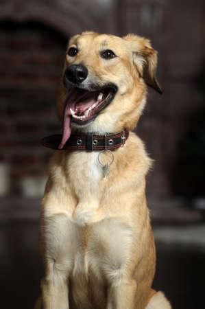 poignant: red mongrel dog