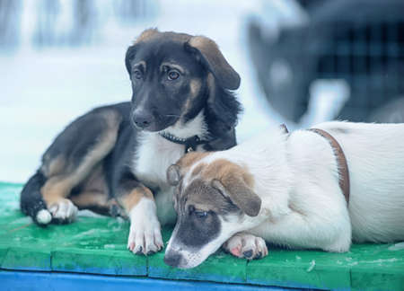 two puppies photo
