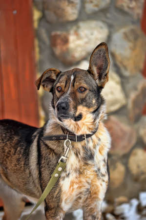 dog on a leash Stock Photo - 19028217