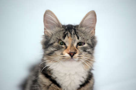 vetinary: kitten with sick eyes Stock Photo