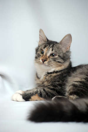 seeps: kitten with sick eyes Stock Photo