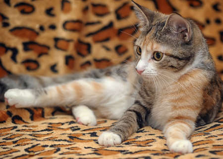 three-color striped kitten photo