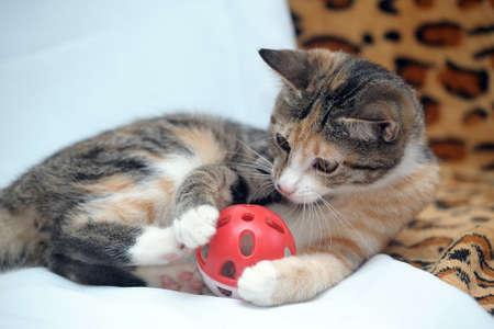귀여운 새끼 고양이 장난감을 가지고 노는 스톡 콘텐츠